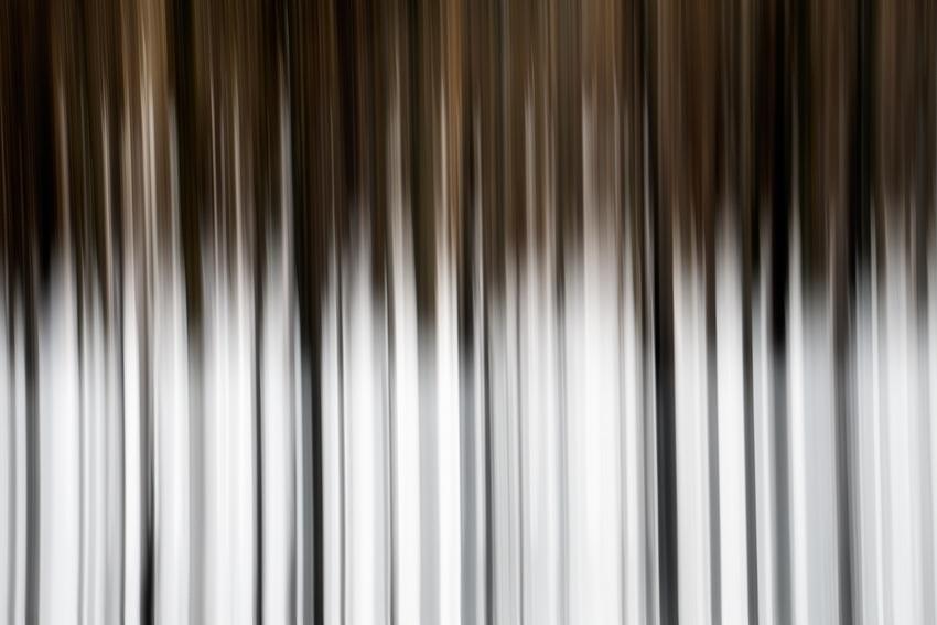 Trees [no. 1080]