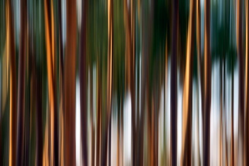 Trees [no. 1081]