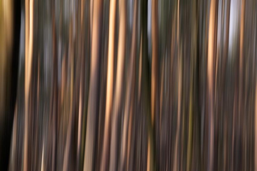Trees [no. 1082]