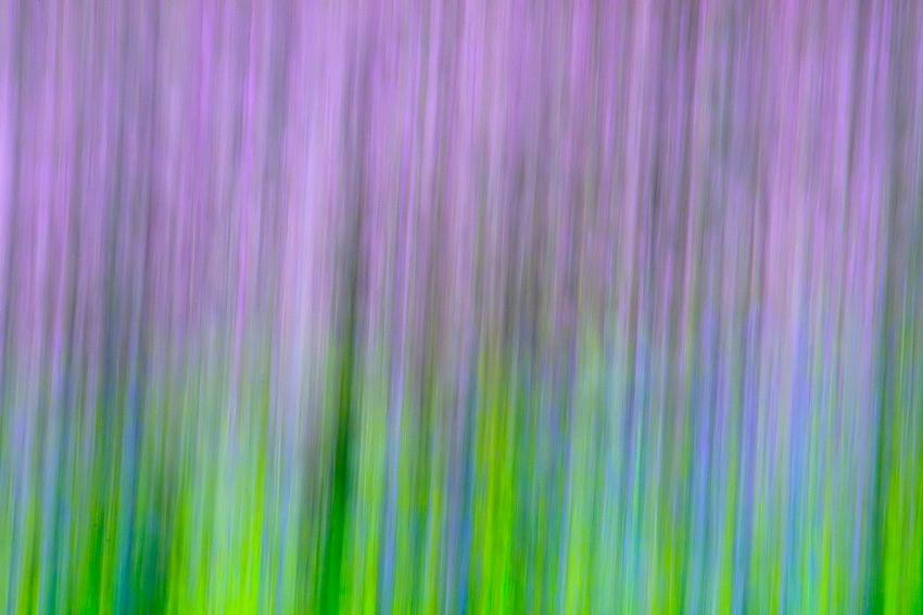 Lavender [no. 773]