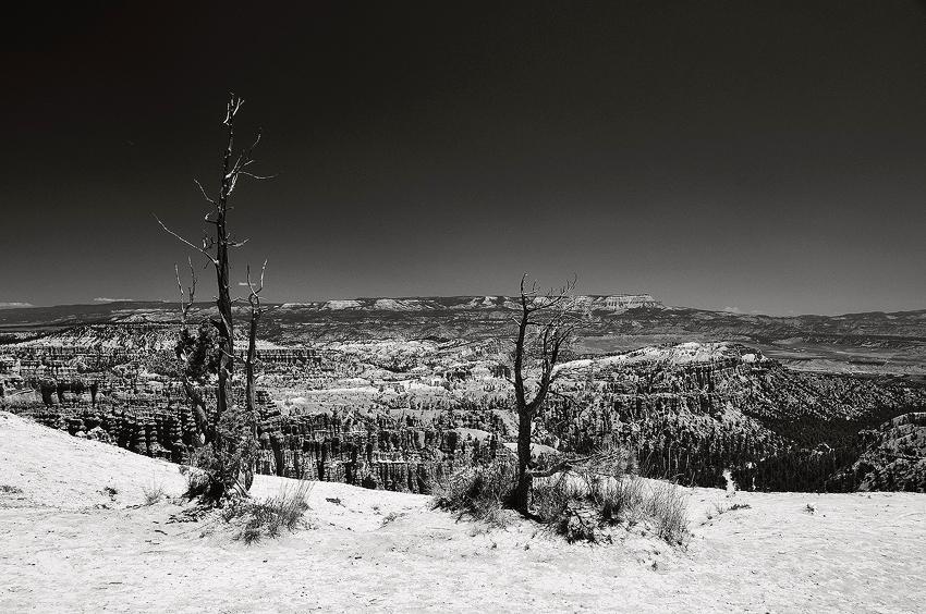 Utah: Bryce Canyon  [no. 493]