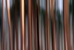 Trees [no. 1084]