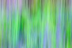 Lavender  [no.772]