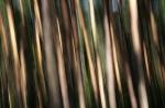 Trees  [no. 301]