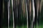 Trees  [no. 299]