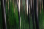 Trees  [no. 300]