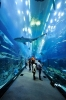 Dubai Aquarium  [no. 1484]
